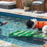 swim class for dogs