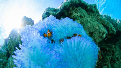 Beautiful_Islands_018.jpg