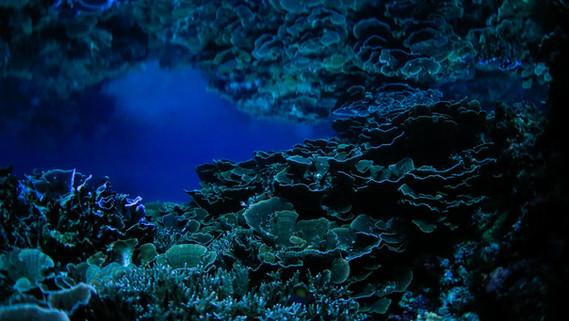 The Night Sea_002.jpg