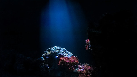 The Night Sea_005.jpg