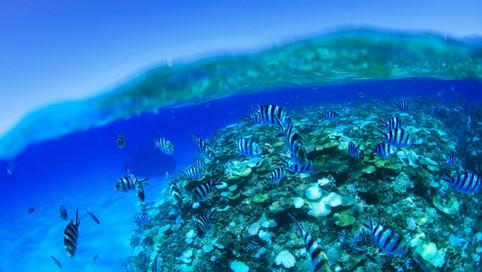 Beautiful_Islands_008.jpg