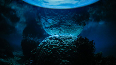 The Night Sea_001.jpg
