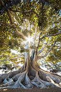 arbre-de-vie-sophrologie.jpg