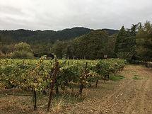 frey vineyards.JPG