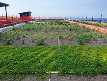 UHWHC_constructed wetland treating waste