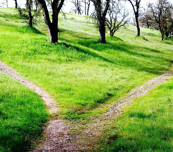 choix, chemin, séparation, faire le bon choix, santé