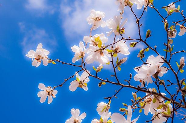 fleur blanche, ciel bleu, printemps, espoir, guérison, croissance, équilibre, hormonal, endocrinien, bébé trisomie 21, maladies génétiques, croissance, intelligence, hormone, équilibre, cerveau, système nerveux, stimulation, langage, crétinisme, hypothyroïdie, hyperthyroïdie, malformation,