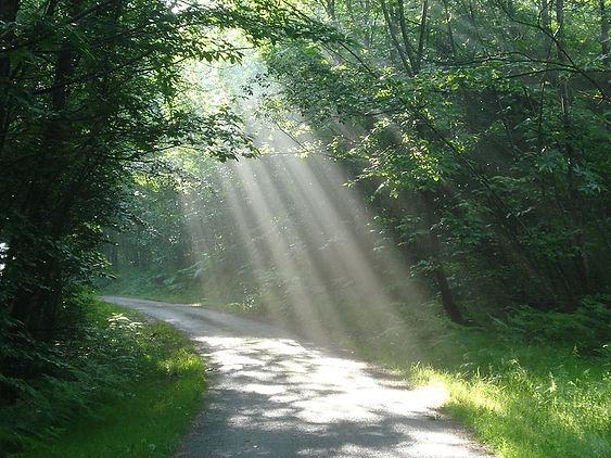 lumière dansun sous bois, espoir, guérison,