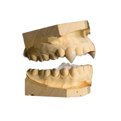 Vampire fangs made with dental materials