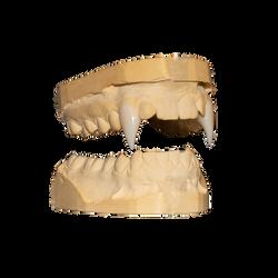 RJ's long length custom vampire fangs