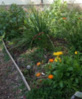 Magical Balingup herb garden at FangSmith