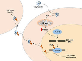 alpha-synuclein toxicity