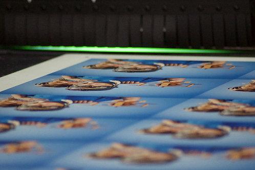 M2 de impresión sobre rígidos