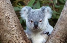 australia_2010-17.jpg