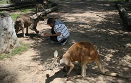 australia_2010-14.jpg