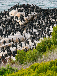 Cape of Good Hope is home to at least 250 species of birds including one of the two mainland colonies of African penguins.