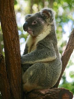 australia_2010-51.jpg