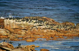 National park of Cape of Good Hope in South Africa.