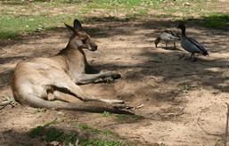 Australia1-2.jpg