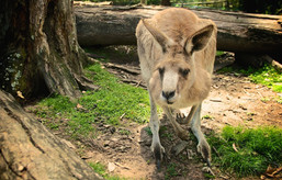 australia_2010-53.jpg