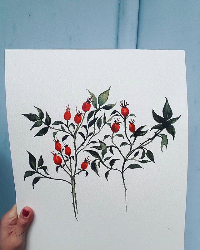 🏥 #watercolour_#tasmania_#rosehip_#goodforthis_#goodforthat_#eglantier_#colour_#sennelier_#beeswaxp
