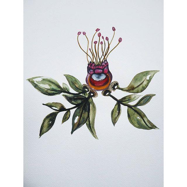 #watercolor #watercolour #painting #gouache #illustration #plant #tasmania #abstract #australia #flo