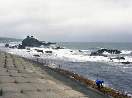 Seaweed Picker, 2009