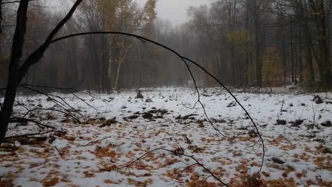 Stick Season
