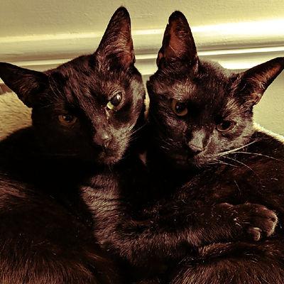 CodyRex_Cats_JennDePaola_1000x1000_edited.jpg