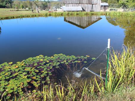 A Zero-Waste Ecosystem at Hinkle Hemp Farm