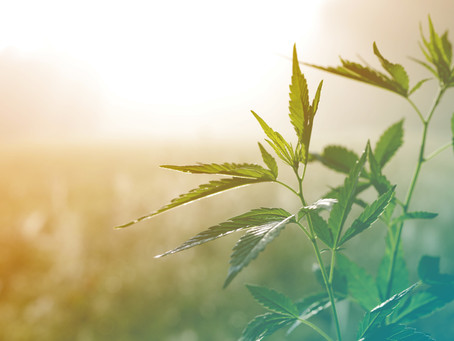The business of hemp in the state of Tennessee