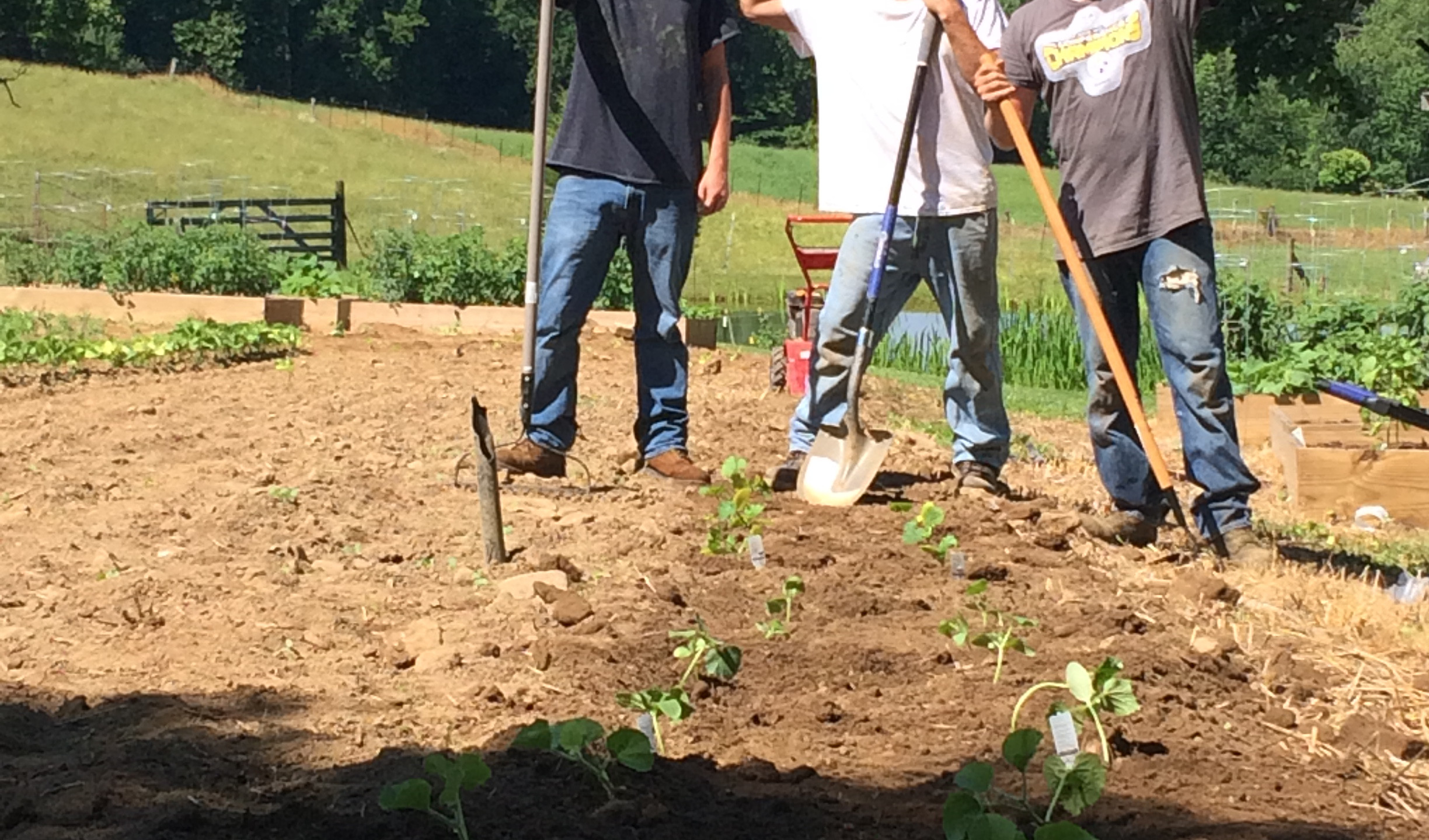 DC Planting Seeds of Change