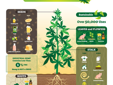 Did you know? The Many Uses of Hemp!