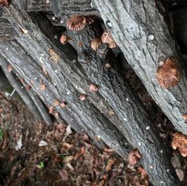 버섯재배장