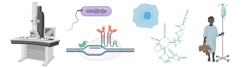 RNA-6_edited_edited.jpg