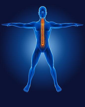 3d-medical-man-with-skeleton-spine-highlighted.jpg