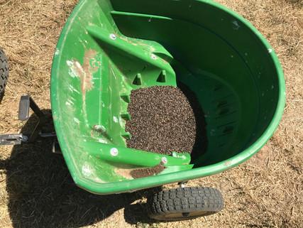 Seeding a 50X50 strip of buckwheat.