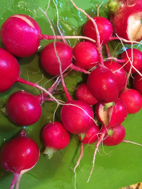 Radishes should be available first week of April.