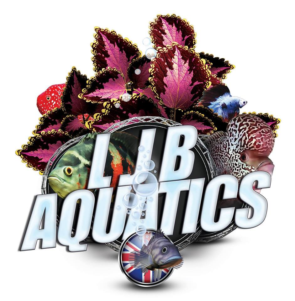 LJB-image