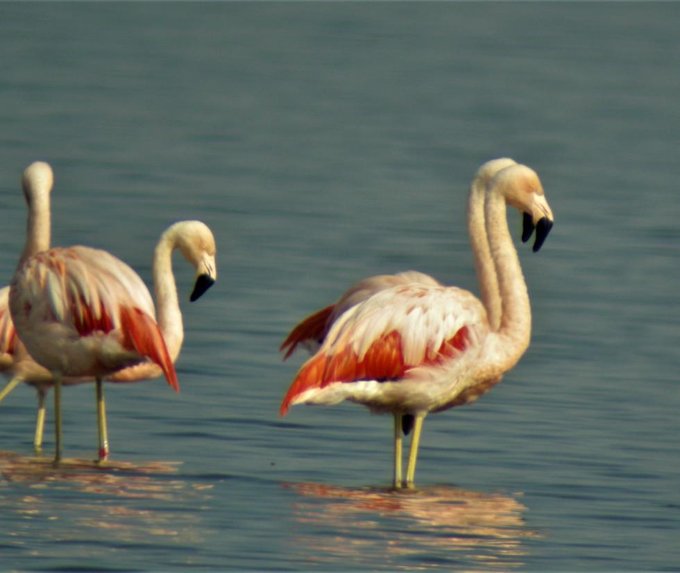 Lagoa do Peixe NP 042.jpg