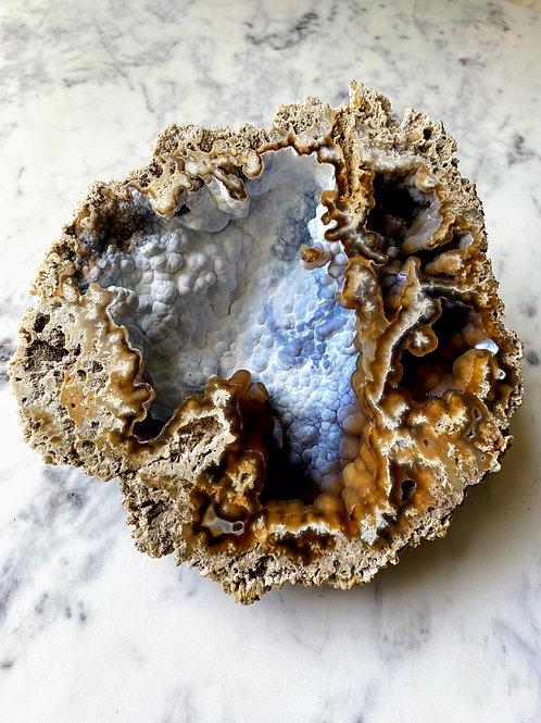 Agatized Coral (Specimen #34)