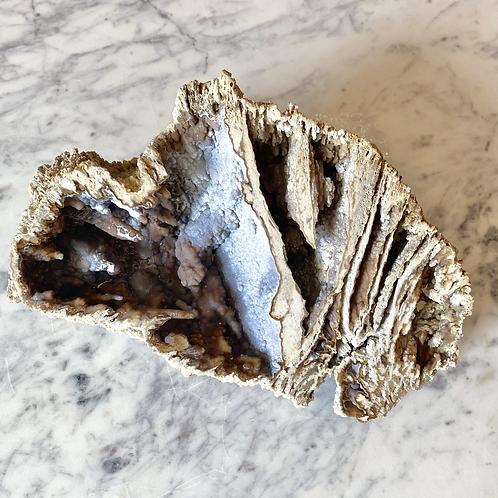 Agatized Coral (Specimen #38)