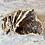 Thumbnail: Agatized Coral (Specimen #37)