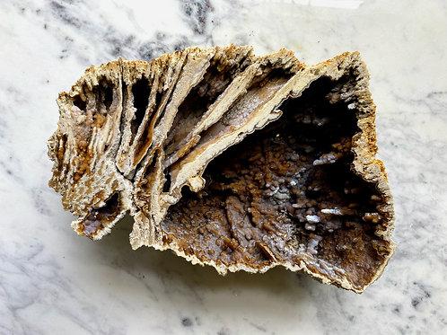 Agatized Coral (Specimen #37)