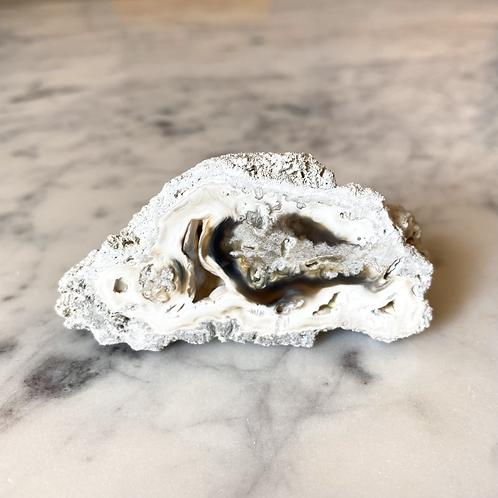 Agatized Coral (Specimen #13)