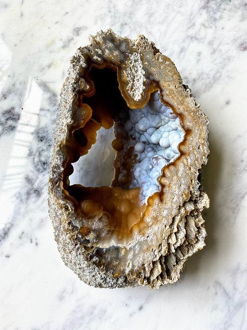 Agatized Coral (Specimen #4)