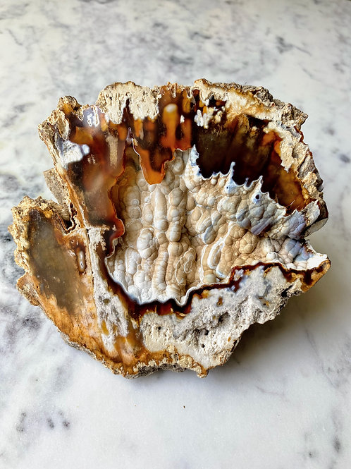 Agatized Coral (Specimen #23)
