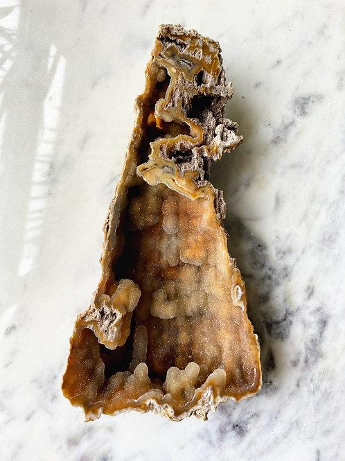 Agatized Coral (Specimen #40)