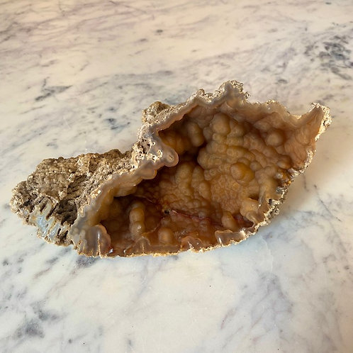 Agatized Coral (Specimen #35)