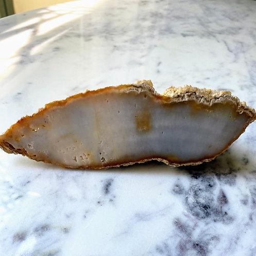 Agatized Coral (Specimen #29)